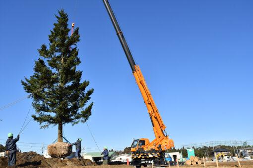 オオソラモ土気のシンボルツリーのモミの木が植樹されましたのイメージ